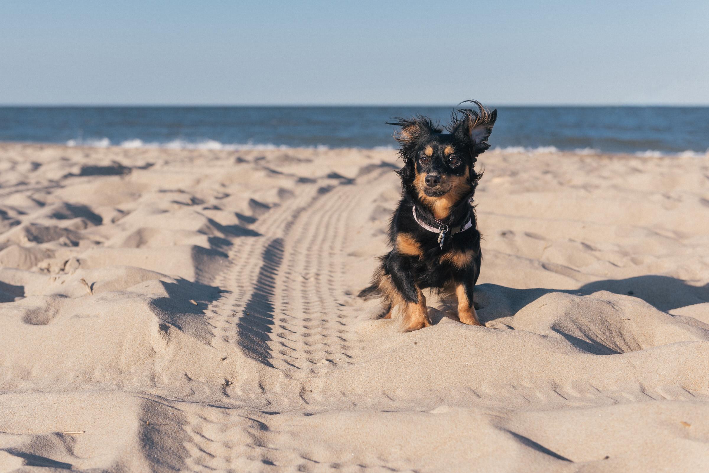 dc dog photographer